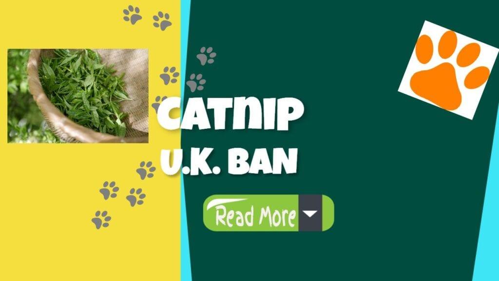 catnip uk ban picture